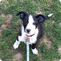Adopt A Pet :: Roca - Dayton, OH