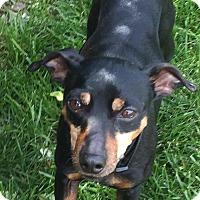 Adopt A Pet :: BUSTER BROWN - Rancho Cucamonga, CA