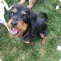 Adopt A Pet :: Murphy - Detroit, MI