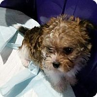 Adopt A Pet :: Anna Bell - Denver, IN