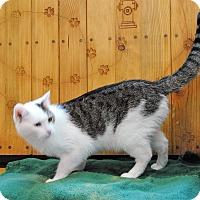 Adopt A Pet :: Bitty - Parsons, KS