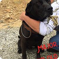 Adopt A Pet :: Major - Towson, MD