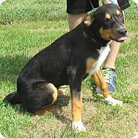 Adopt A Pet :: Titan - Reeds Spring, MO