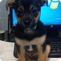 Adopt A Pet :: Hopper - Huntsville, AL