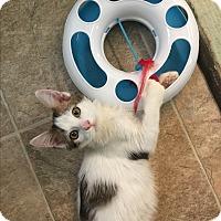 Adopt A Pet :: Nacio - Leander, TX