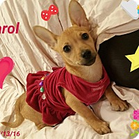 Adopt A Pet :: Carol - LAKEWOOD, CA