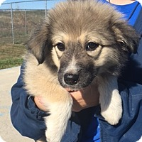 Adopt A Pet :: Lucy#2 - Sparta, NJ