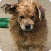 Adopt A Pet :: Hedwig - Allentown, PA