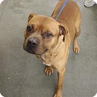 Adopt A Pet :: Klyde - Greensboro, NC