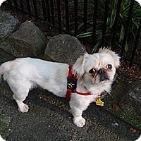 Adopt A Pet :: Taylor - Chantilly, VA