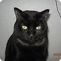 Adopt A Pet :: Bart - Colorado Springs, CO
