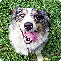 Adopt A Pet :: Bess - Available SOON - Savannah, GA