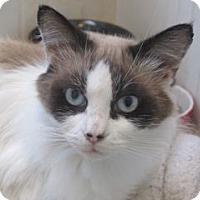 Adopt A Pet :: Lottie - Davis, CA