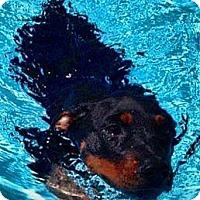 Adopt A Pet :: Levi - Scottsdale, AZ