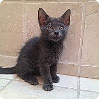 Adopt A Pet :: Lotus - East Hanover, NJ