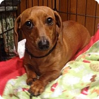 Adopt A Pet :: SAGE - Portland, OR