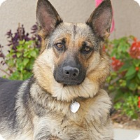 Adopt A Pet :: Gretchen von Geyer - Thousand Oaks, CA