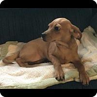 Adopt A Pet :: Mckenzie - Hampton, VA