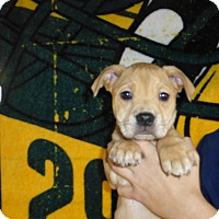 Adopt A Pet :: Spruce - Oviedo, FL