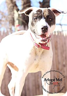 Hound (Unknown Type) Mix Dog for adoption in Mt Vernon, New York - Blonde