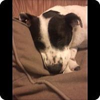 Adopt A Pet :: Elsa - Albemarle, NC