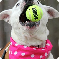 Adopt A Pet :: Brianna - Marietta, GA