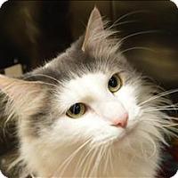 Adopt A Pet :: Jax - Sherwood, OR