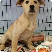 Adopt A Pet :: Bennie - Philadelphia, PA