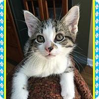 Adopt A Pet :: Bernie - Mt. Prospect, IL