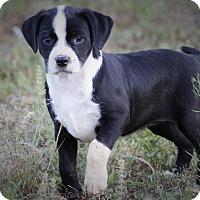 Adopt A Pet :: Sally - Good Hope, GA