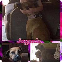 Adopt A Pet :: Jayme - Tomah, WI