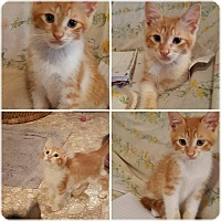 Adopt A Pet :: Astor - Ocala, FL