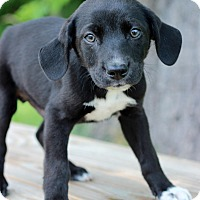 Adopt A Pet :: Brian - Waldorf, MD