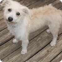 Adopt A Pet :: Payton - Rocky Mount, NC