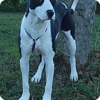 Adopt A Pet :: Uno - Hartford, CT