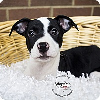Adopt A Pet :: Jynx (Pokemon Litter) - Mooresville, NC
