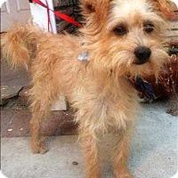 Adopt A Pet :: Bam Bam - Encino, CA
