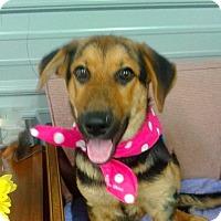 Adopt A Pet :: Maisy - Princeton, KY