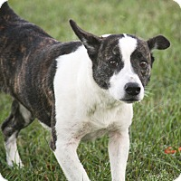 Adopt A Pet :: Archie - Friendswood, TX