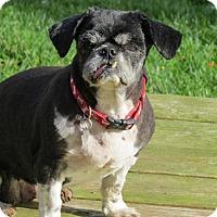 Adopt A Pet :: Dixie 3150 - Toronto, ON