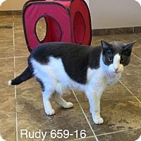 Adopt A Pet :: Rudy - Cumming, GA