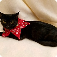 Adopt A Pet :: Binx - Northfield, OH