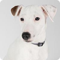 Adopt A Pet :: Jose - St. Louis Park, MN