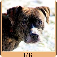 Adopt A Pet :: Eli - Sullivan, IN