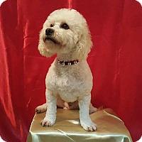 Adopt A Pet :: Guero - San Ysidro, CA