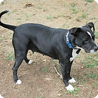 Adopt A Pet :: Cora - Marietta, GA