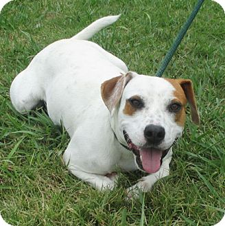 BUSTER | Adopted Dog | courtesy posting/contact ...