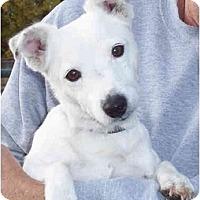 Adopt A Pet :: LEWIS - Phoenix, AZ