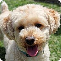 Adopt A Pet :: Dougie - La Costa, CA