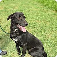 Adopt A Pet :: APOLLO/End of Summer Special - Glastonbury, CT